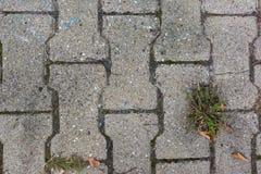 Mattonelle Grey Texture Weed Outdoors ruvido di pietra concreto del marciapiede Fotografia Stock Libera da Diritti