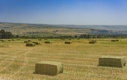 Mattonelle urgenti della paglia a sinistra del raccolto che si trova su un campo al tramonto Immagine Stock