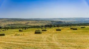 Mattonelle urgenti della paglia a sinistra del raccolto che si trova su un campo al tramonto Fotografia Stock