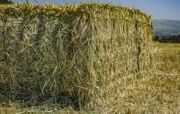 Mattonelle urgenti della paglia a sinistra del raccolto che si trova su un campo al tramonto Immagini Stock