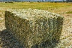 Mattonelle urgenti della paglia a sinistra del raccolto che si trova su un campo al tramonto Fotografie Stock