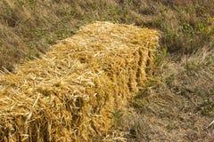 Mattonelle urgenti della paglia a sinistra del raccolto che si trova su un campo alle mattonelle del fieno pressato di tramonto s Fotografia Stock Libera da Diritti
