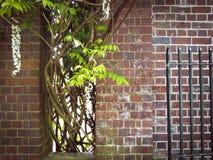Mattoni e piante Fotografia Stock