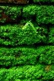 Mattoni verdi fotografie stock libere da diritti