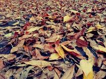 Dry leaves on sidewalk royalty free stock image