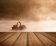 Matująca para łabędź na misy mgłowego ASutumn spadku macania jeziornym sce Obrazy Royalty Free