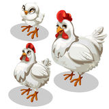 Maturation stages of the chicken, cartoon style Royalty Free Stock Images