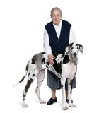 Mature Adult and great dane. In front of a white background Stock Image