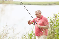 Mature angler on lake. Middle aged man wearing polo shirt, setting up bait during summer angling on lake - fishing concept royalty free stock photography