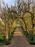 Apple tree arch in garden. Mature apple tree arch over a pebble pathway in a garden Royalty Free Stock Photos