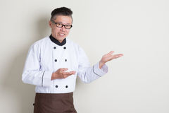 Mature Asian Chinese chef showing something. Portrait of 50s mature Asian male chef in uniform showing something, standing on plain background with shadow, copy royalty free stock photography