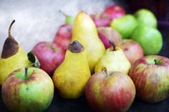 Mature autumn fruit. Still life with organic autumn fruit, mature pears and apples fruit Stock Image