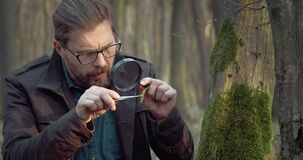 Mature biologist studying features of live plants at forest