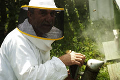 Mature beekeeper smoking bees in beehive Royalty Free Stock Images