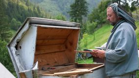 Mature beekeeper working with beehive in summer. stock footage