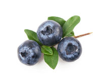Mature bilberry Royalty Free Stock Photo