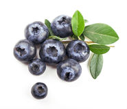 Mature bilberry royalty free stock images