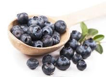 Mature bilberry Stock Photos