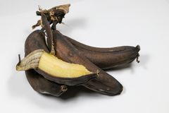 Mature brown banana. A long curved fruit that grows in clusters and has soft pulpy flesh and yellow skin when ripe Royalty Free Stock Photos