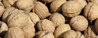 Mature Brown coconuts for sale Royalty Free Stock Photos