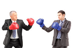 Mature businessman with boxing gloves ready to fight his coworker. Mature businessman with red boxing gloves ready to fight his coworker isolated on white royalty free stock images