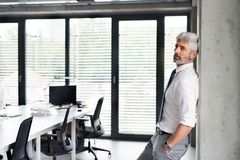 Mature businessman with gray hair in the office. Royalty Free Stock Image