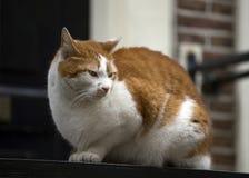 Mature cat Stock Photo