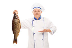 Mature chef holding a big freshwater fish Royalty Free Stock Images