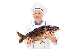 Mature chef holding a fresh chub Stock Images