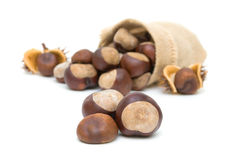 Mature chestnuts Stock Images