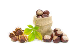 Mature chestnuts and green leaf on a white background Royalty Free Stock Image
