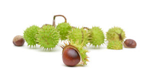 Mature chestnuts on a white background Royalty Free Stock Photography