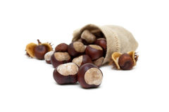 Mature chestnuts  on white background. Stock Photography