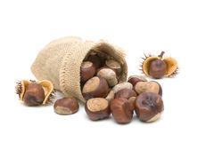 Mature chestnuts on a white background. horizontal photo. Royalty Free Stock Photography