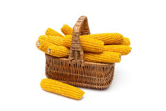 Mature corn cobs lie in a wicker basket. Royalty Free Stock Photography