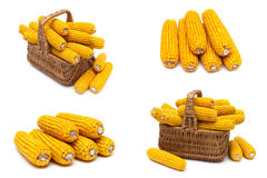 Mature corn cobs on a white background. Stock Images