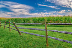 Mature Corn Field With Wooden Fence and Great Sky Stock Image
