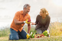 Mature Couple Cultivating Vegetables Royalty Free Stock Images