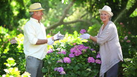 Mature couple cutting flowers stock video