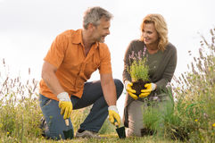 Mature Couple Gardening Stock Photography