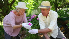 Mature couple gardening together Royalty Free Stock Photos
