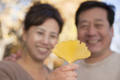 Mature Couple Looking at the Leaf in the Park, Focus on Leaf Royalty Free Stock Photography