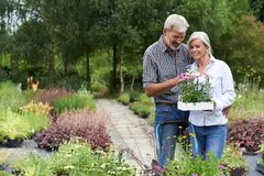 Mature Couple Shopping For Plants At Garden Center Stock Photography
