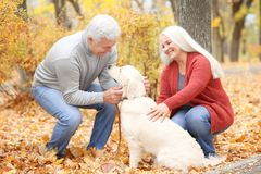 Mature couple with their dog. In park Stock Photos