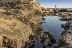 Mature couple walking on the beach with rocks and seaweed. estoril portugal. Europe royalty free stock image