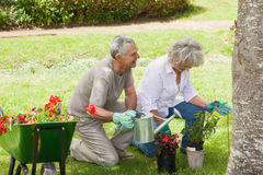 Mature couple watering young plants in lawn Royalty Free Stock Photo