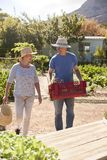 Mature Couple Working On Community Allotment Together Stock Photo