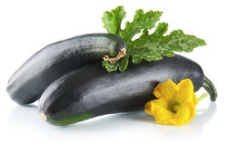 Mature courgettes with flowers on white background Stock Photos