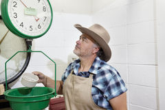 Mature cowboy looking up at weight scale Royalty Free Stock Images