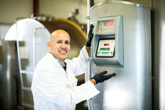 Mature employee working in raw milk sector Royalty Free Stock Images